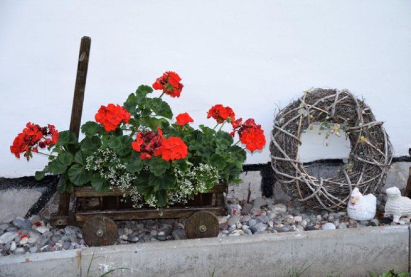 G Blumen_2017_Hofer_4